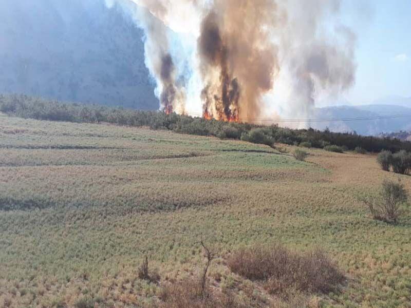 خبرنگاران شعله های آتش دوباره در تالاب شیمبار اندیکا زبانه کشید