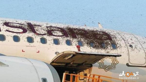حمله زنبورها به هواپیمای مسافربری هند، عکس
