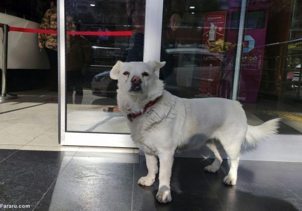 (ویدئو) سگی که 6 روز بیرون بیمارستان منتظر صاحبش ماند