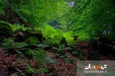 جنگل های سوادکوه؛از بکرترین مناطق گردشگری ایران، عکس