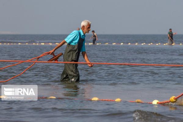 خبرنگاران سرما و توفانی بودن دلیل اصلی کاهش صید ماهی در سواحل مازندران