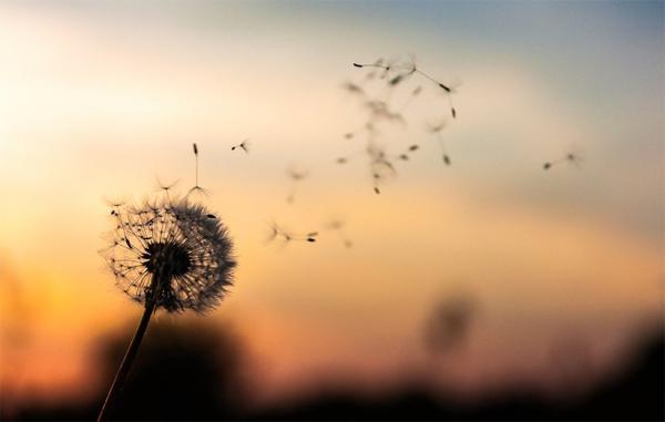 5 کتاب فلسفی قابل فهم برای یافتن معنی زندگی